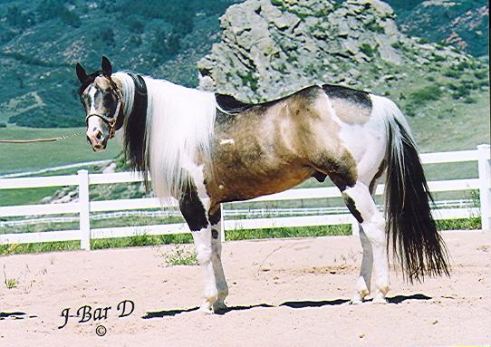 Joni Voloshin Performance Horses: Passion Buck, 1998 APHA ...
